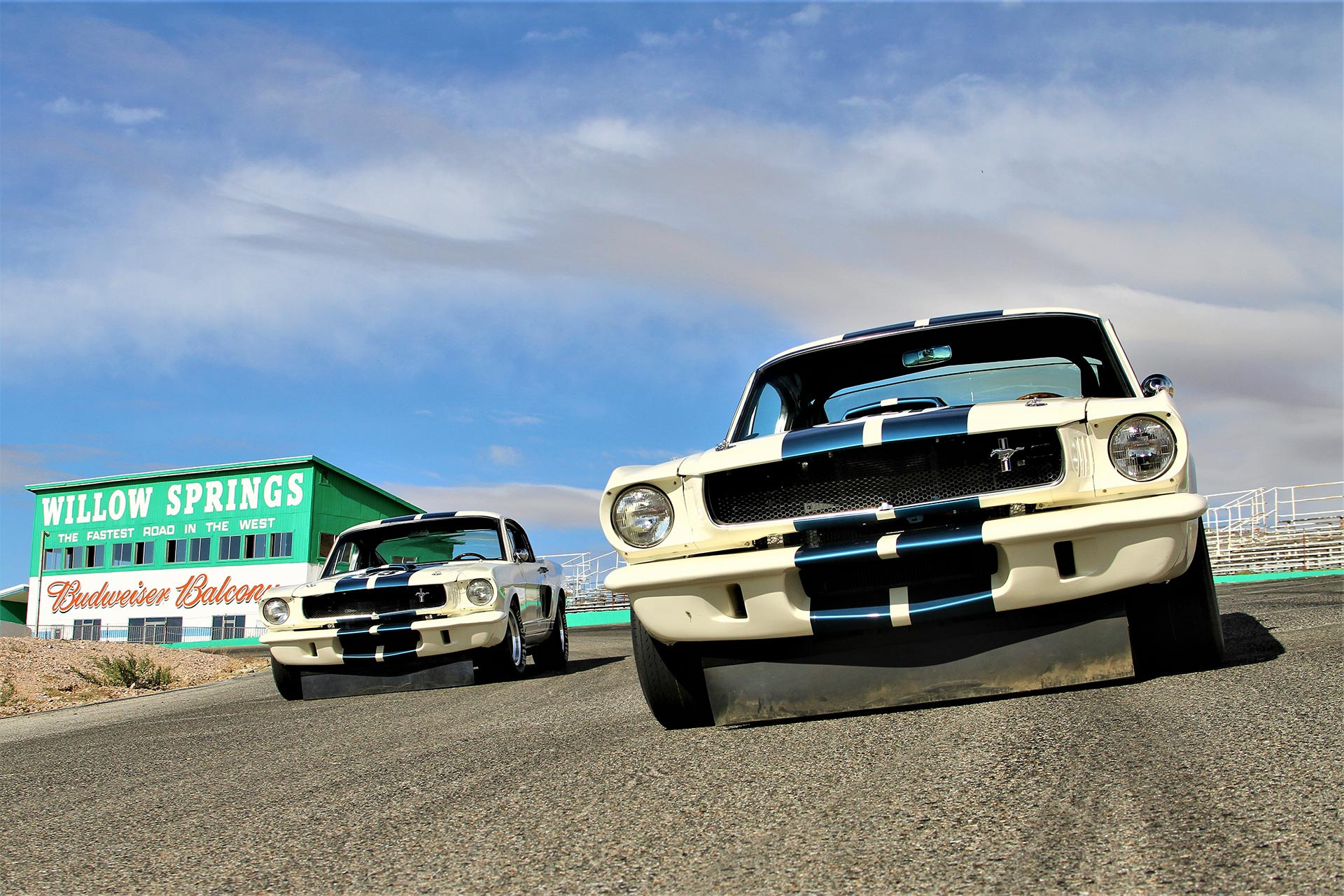 Ford Mustangs on the track